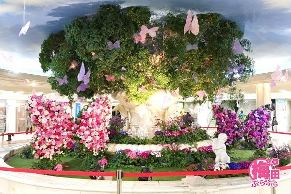 蝶が集まる花の泉